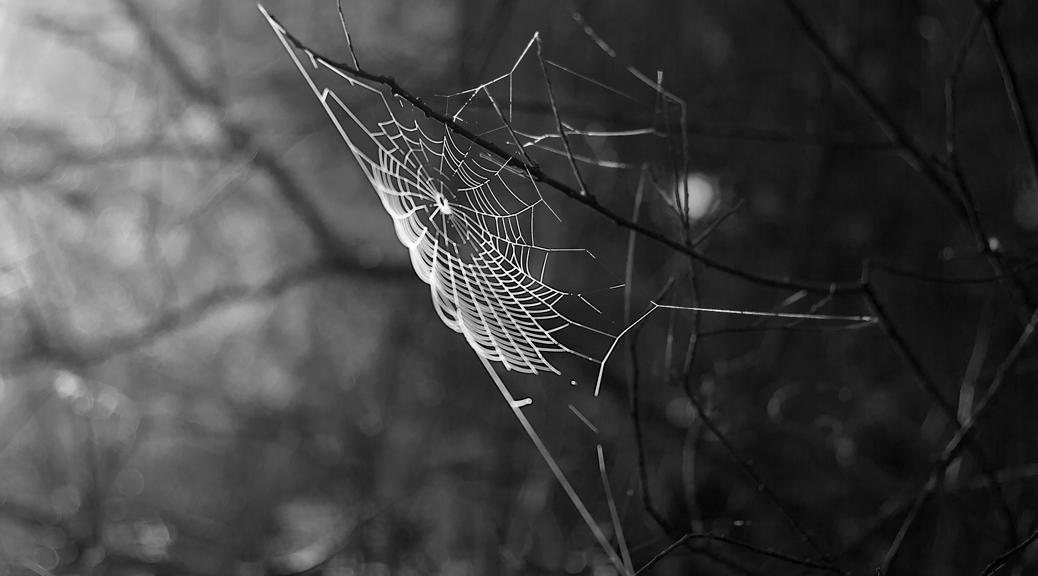 experiment_spiderweb