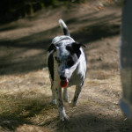 visitor doge