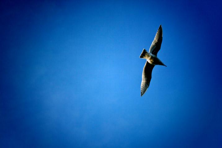 deep_blue_flight.jpg
