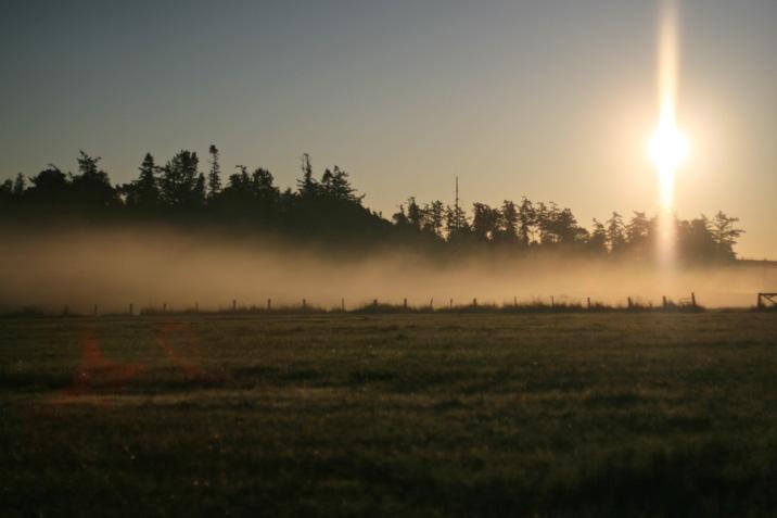 farm_mist.jpg