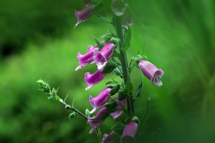 finnerty gardens, victoria british columbia