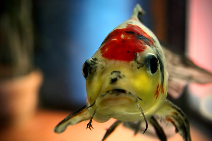 fish0r.jpg