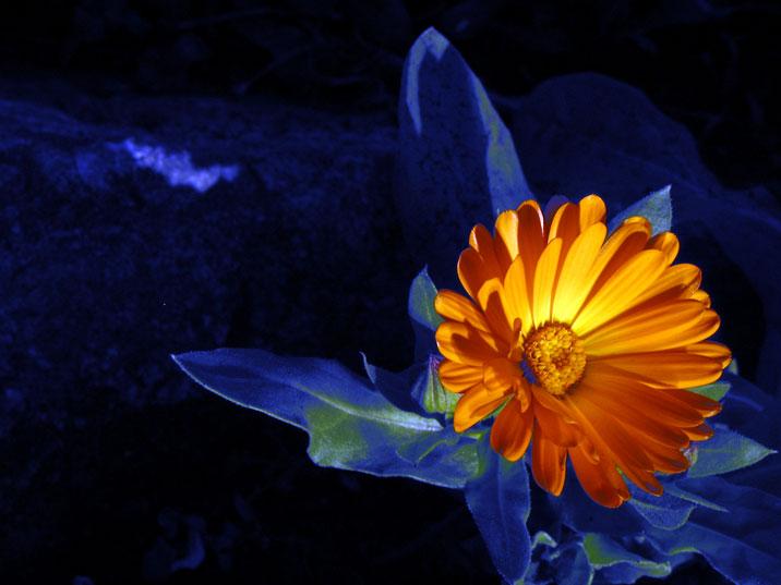 flower_blorange.jpg