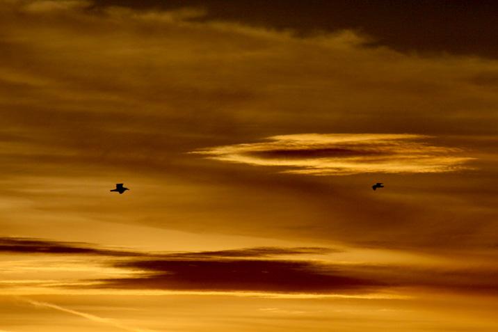 goldenbirds.jpg