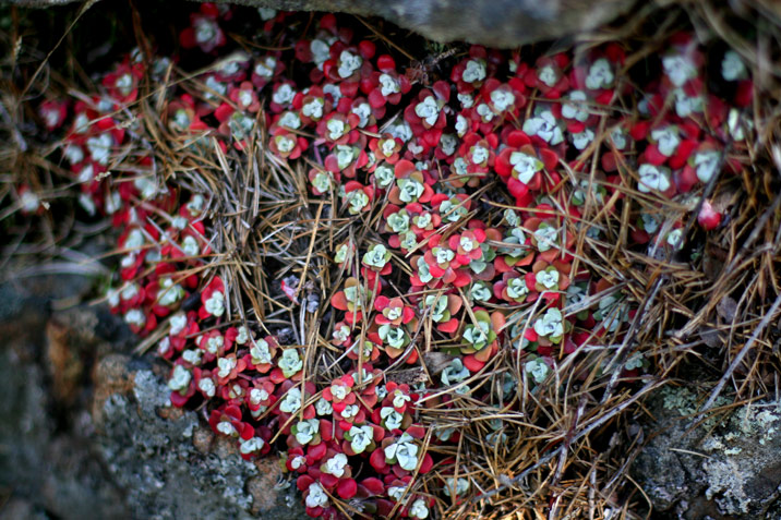 photogroffee_flowerthings.jpg