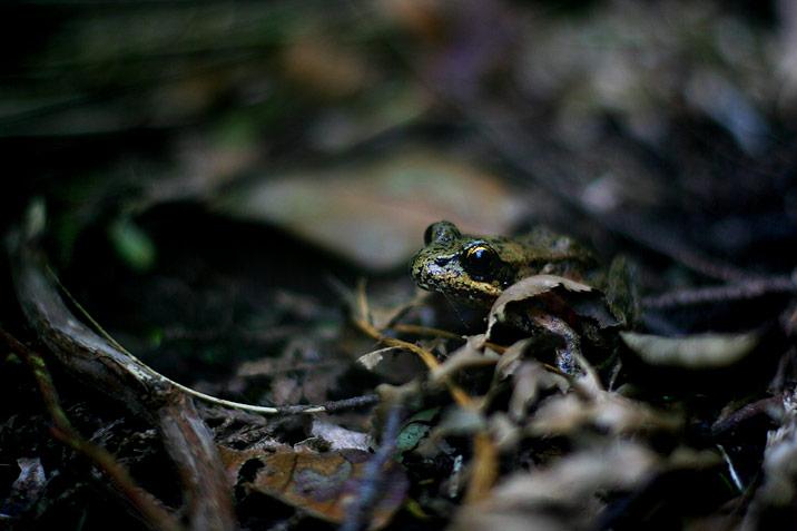 photogroffee_froggy.jpg