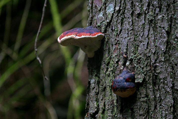 photogroffee_mushroom.jpg