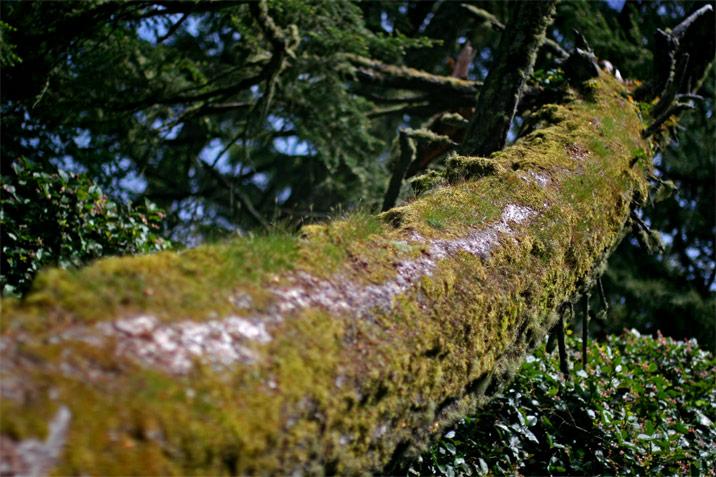 photogroffee_treepath.jpg