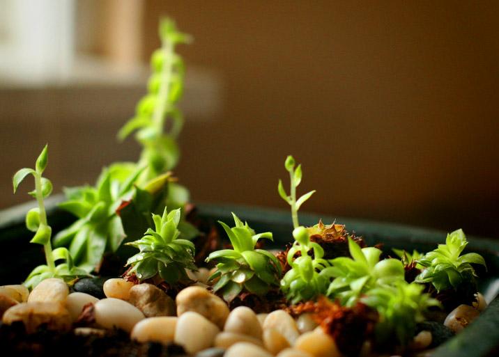regrowth.jpg