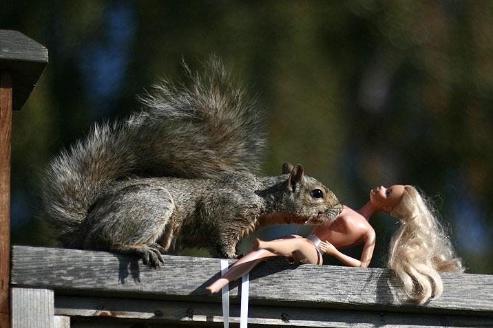 squirrel barbie