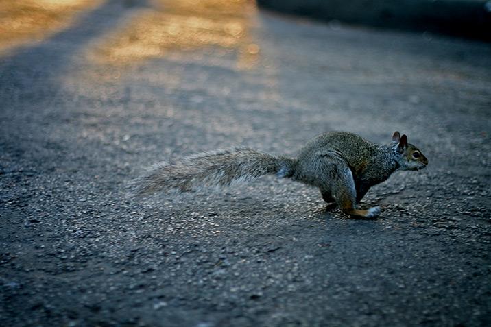 squirrel_leap.jpg