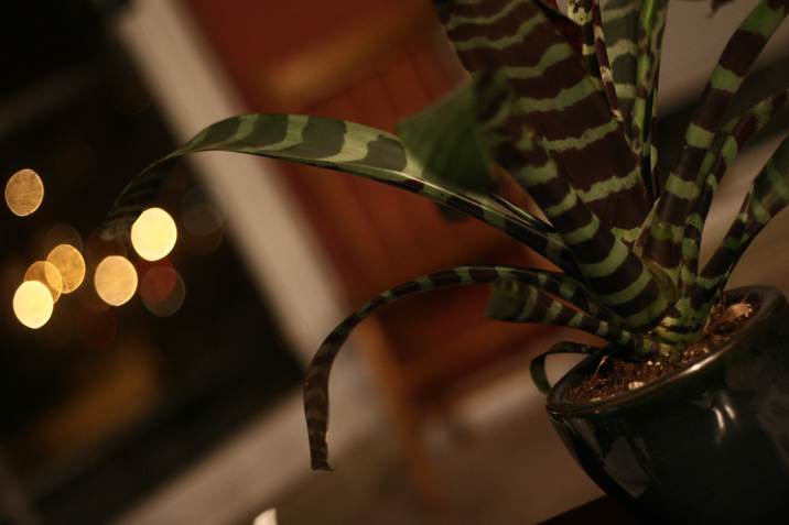 tiger_plant.jpg